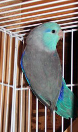 Blue-arrotlet-medium.jpg